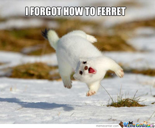 I Forgot How To Ferret