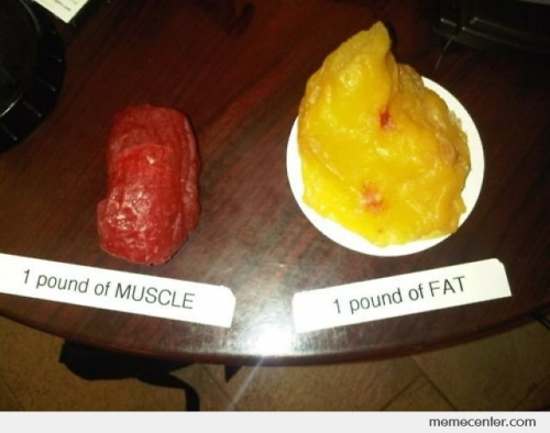 1 Pound of Muscle Vs Fat