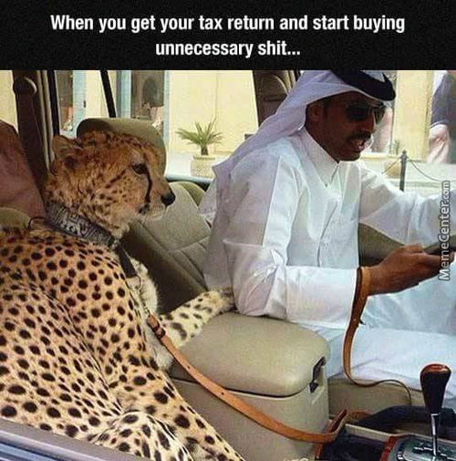 10/10 Would Totally Waste My Money On A Cheeta