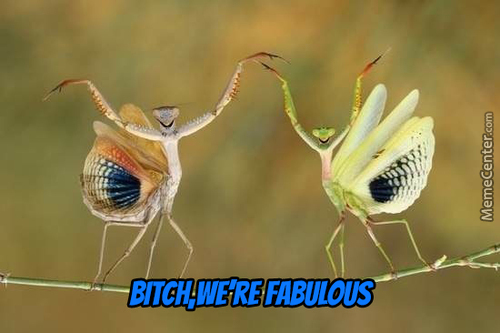 2 Praying Mantis Rocking