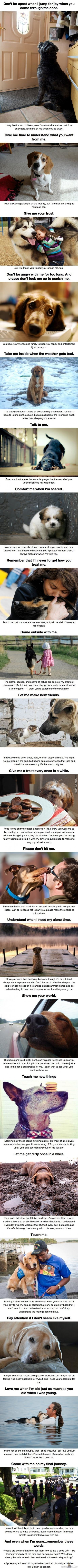 20 Things To Dog Owners