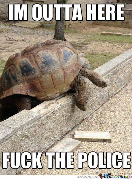 500Lb Tortoise Attempting An Escape