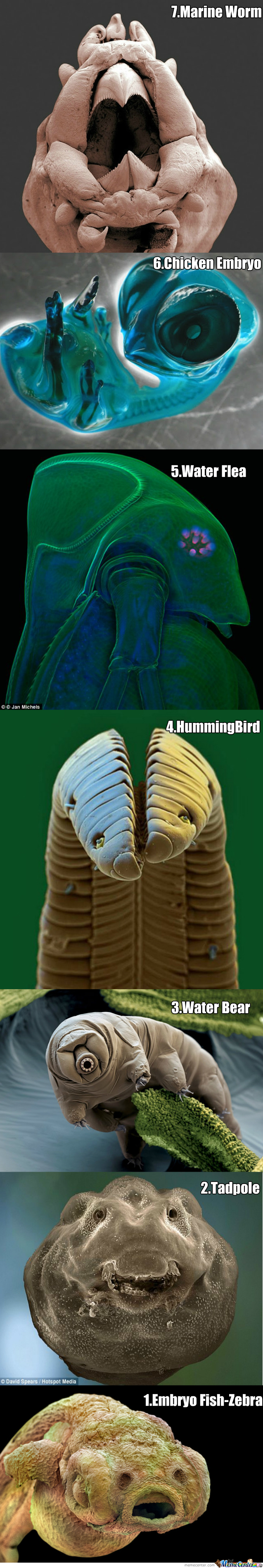 7 Amazing Creatures In A Microscope