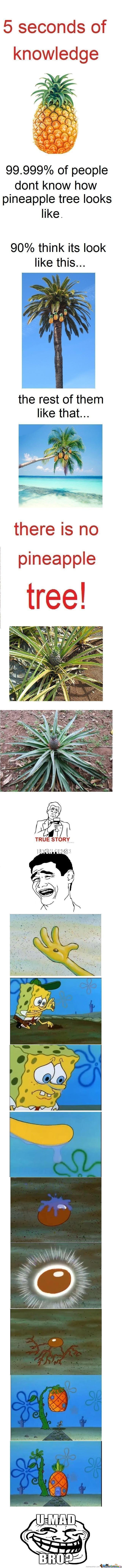 .999 Of People Don't Know How Pineapple Tree Looks Like