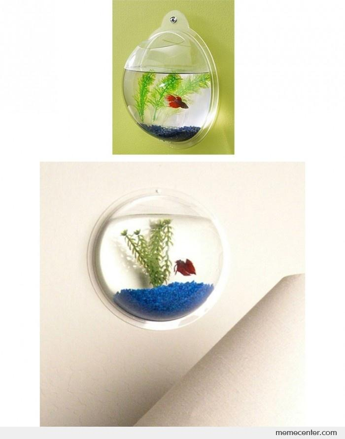 Acrylic wall mount fish bowl by ben meme center for Acrylic fish bowl