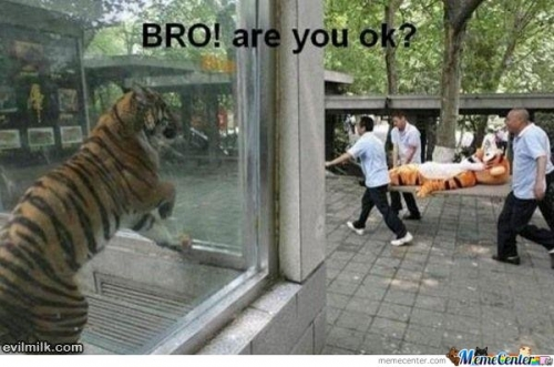 BRO! Are You OK?