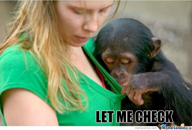 Baby Chimp Checks Stuff