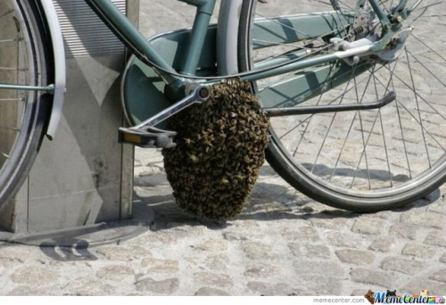 Bee Hive On Bike