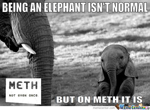 Being An Elephant Isn't Normal. But On Meth It Is
