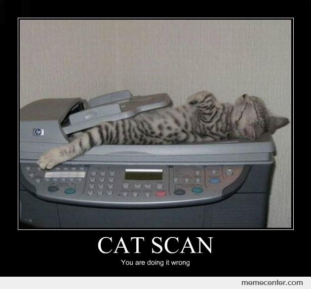 Funny Image Cat Scan