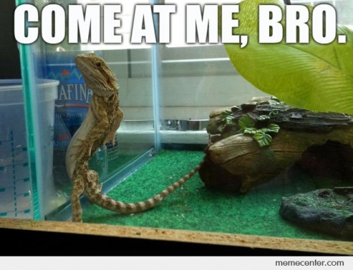 Come At Me Bro Chameleon