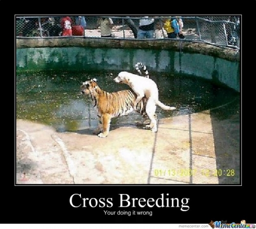 Cross breeds