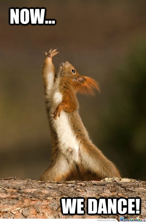 Dancing With The SQUIRREL