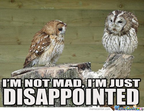 Disapointed Owl