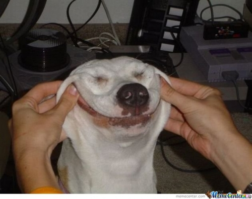 Dog Troll Face