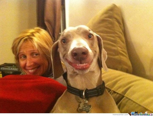 Dog , smile for the camera