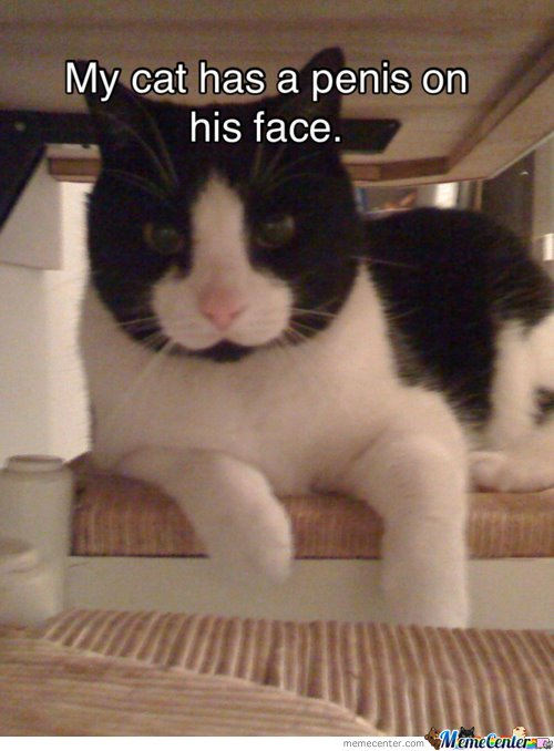 Epic Cat Makes Your Argument Invalid