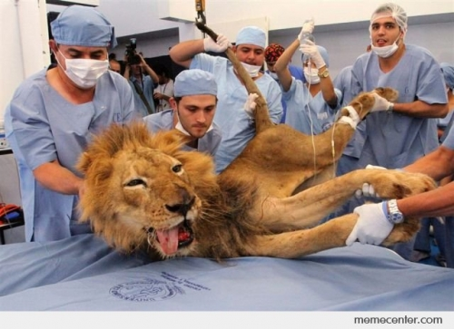Fainted Lion