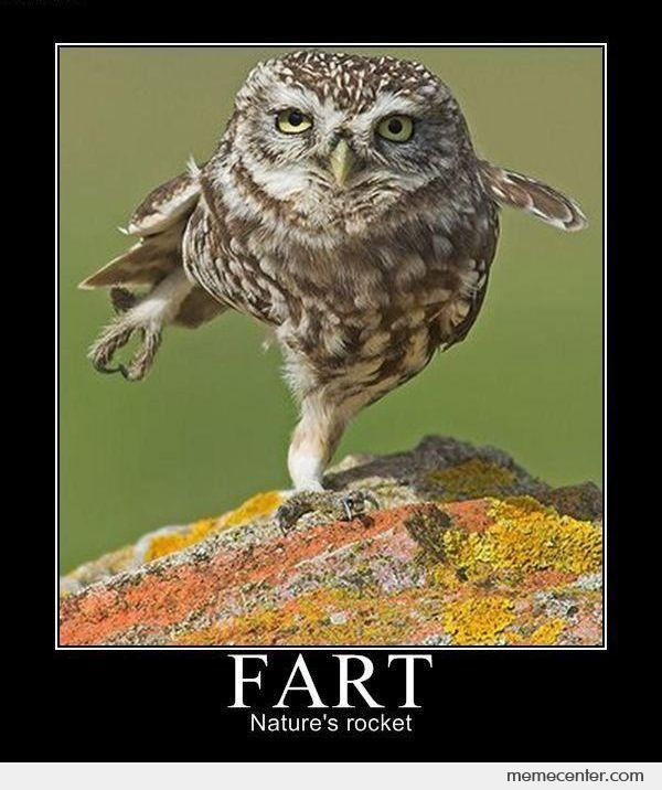 Farting Owl