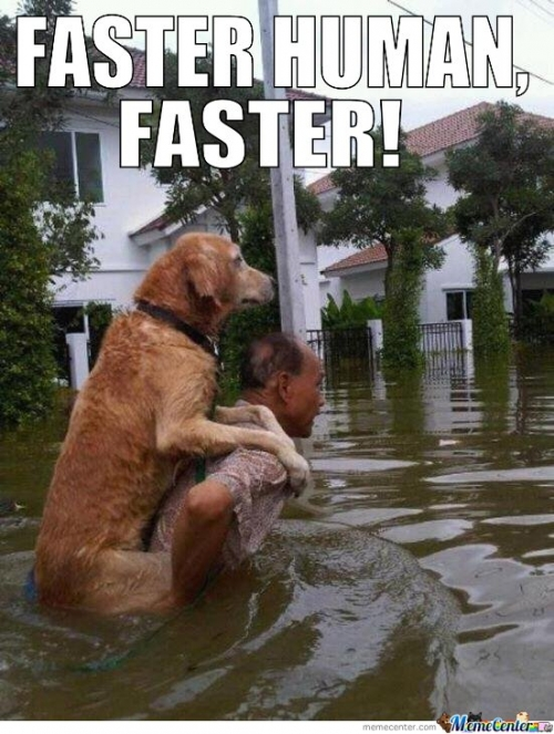 Faster Human, Faster!