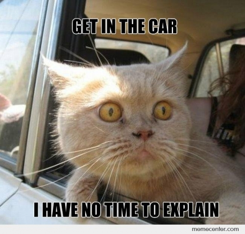 Get In The Car Cat