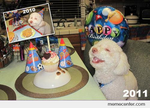Happy Dog's new birthday