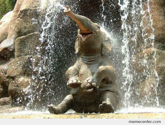 Happy Elephant is Happy
