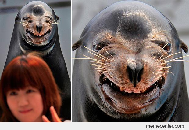 Happy seal is happy