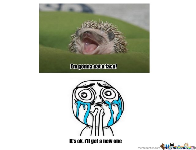 Hedgehog Eat yo face