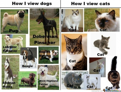 How I View Dogs, How I View Cats