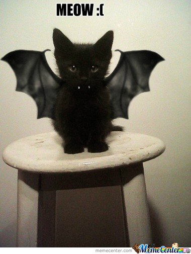 I'm a cat, not  a bat.