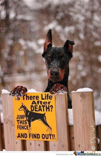 Is there life after death? Jump this fence and find out