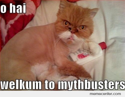 Jamie Hyneman Cat