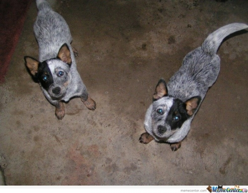 Just Twin Dogs