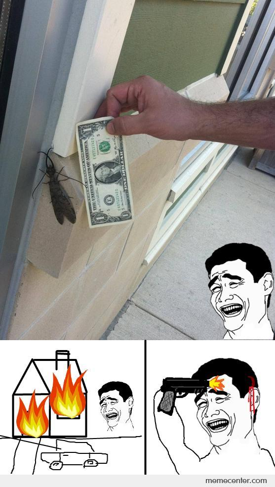 Just an Insect
