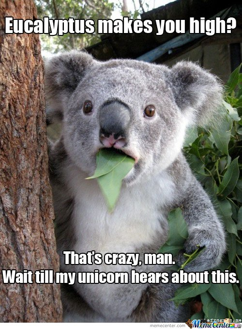 Koala : Eucalyptus makes you high?
