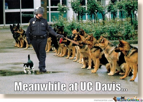 Meanwhile At UC Davis