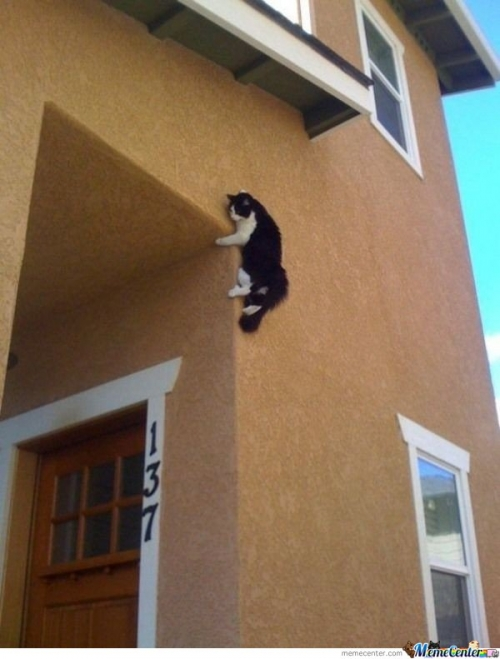 Ninja Cat is ready when your not