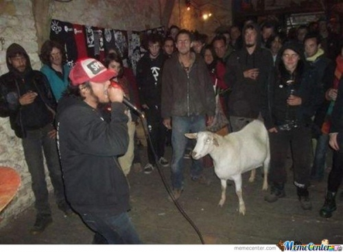 Not Sure What's About To Happen, But I Would NOT Want To Be That Goat...
