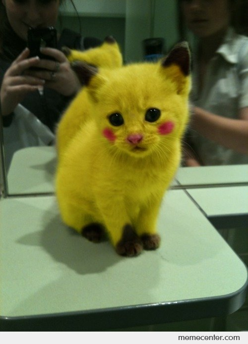 Pikachu Kitty