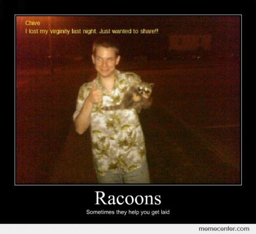 Racoon Demotivational poster