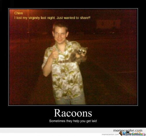 Racoons help you get laid