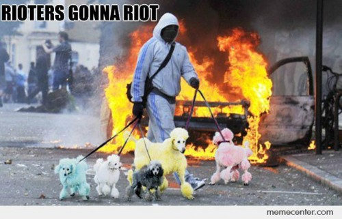 Rioter Making Dogs Walk Out