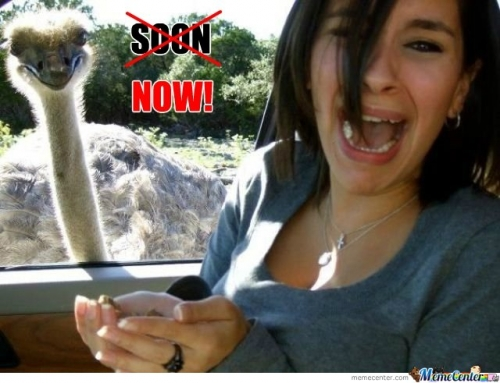 Scared By Ostrich