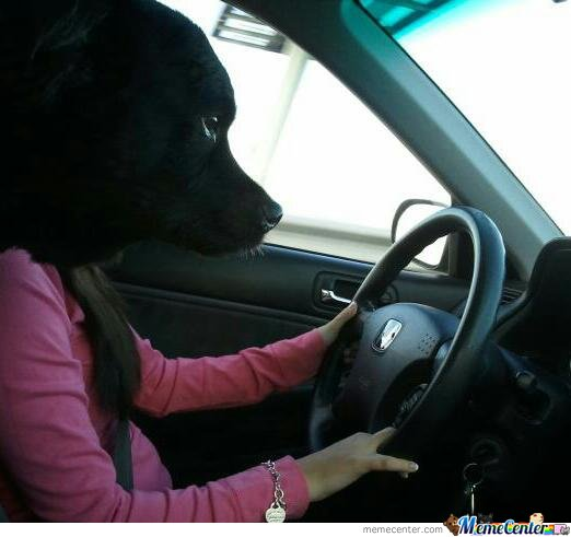 Silly dog...you know you can't drive.  Especially a female one......