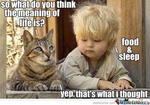 So what do you think the meaning of life is?