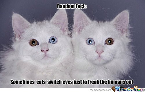 Sometimes cats switch eyes just to freak the humans out