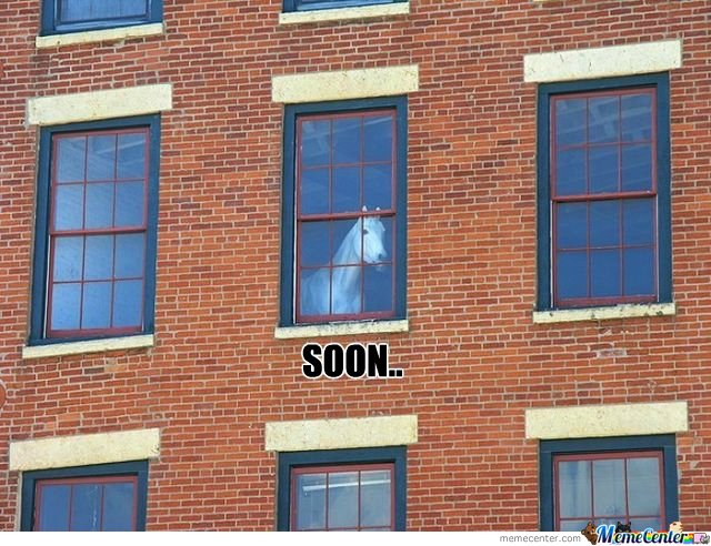 Soon Horse Looking From Window