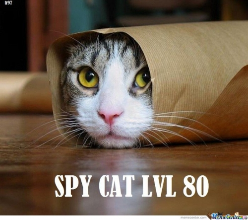 Spy Cat Lvl 80