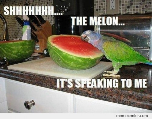 Ssh Melon is speaking to me